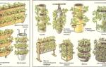 Выращивание клубники в теплице круглый год технология: своими руками круглогодично, видео сортов