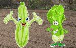 Что можно посадить в теплице с огурцами: как садить арбуз и перец, соседство капусты с кабачками, что сажать рядом