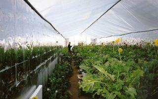 Теплица в земле: подземная и круглогодичная для садоводства своими руками, углубленная без отопления, зимняя