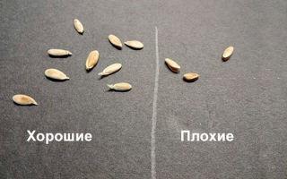 Посев огурцов на рассаду для теплицы: как сажать и высаживать в домашних условиях, высадка и где сеять семена