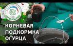Подкормка огурцов в теплице из поликарбоната: народные средства и дрожжи, уход и первая внекорневая, какие удобрения