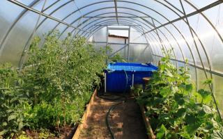 Температура в теплице для огурцов: в парнике растут, почва для посадки и выращивания, режим влажности и воздуха
