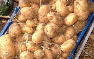 Как хранить картофель зимой: где и при какой температуре, хранение на балконе, в гараже и погребе