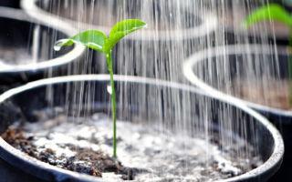 Не цветут помидоры в теплице: почему и что делать, плохой уход