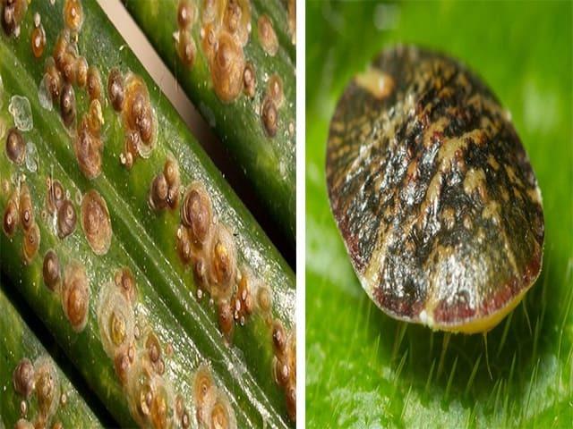 Фитоверм и его аналоги: как применять от тли и других вредителей садовых и комнатных растений