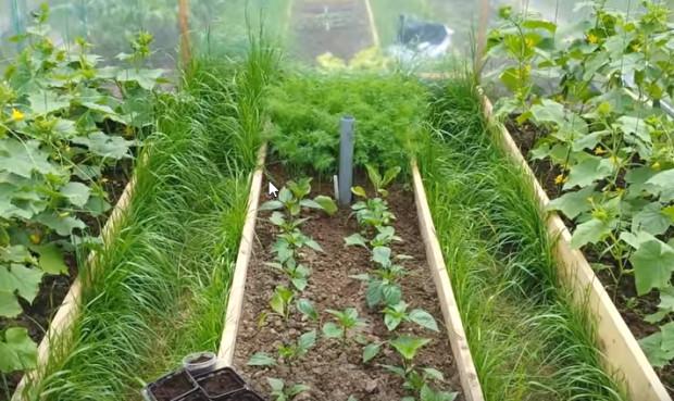 как правильно расположить овощи в теплице