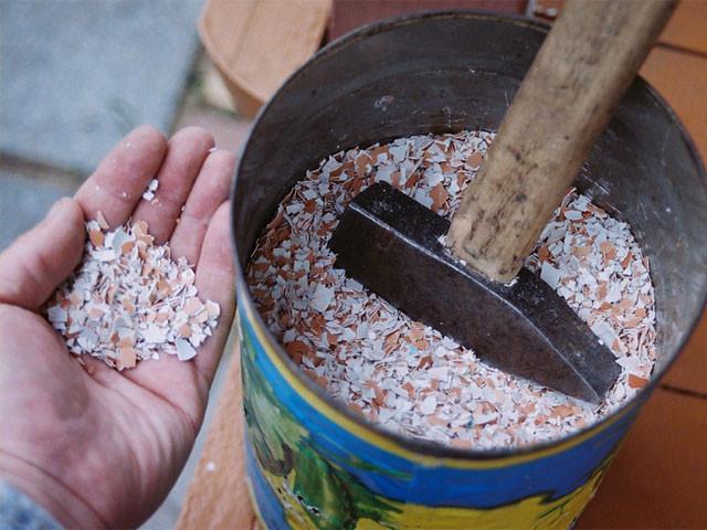 Проволочник в картошке: как избавиться, в том числе, чем обработать перед посадкой, а также соседство с каким растением защитит от вредителя