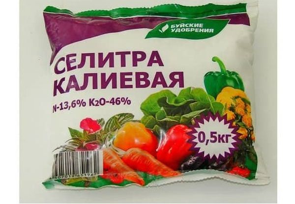 Сорт картофеля Ред Скарлет, описание, характеристика и отзывы, а также особенности выращивания