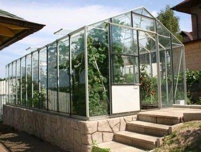 Сотовый поликарбонат для теплиц и парников: нюансы выбора и монтажа