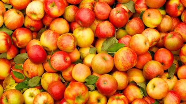 Поздние сорта яблонь: названия, описание, характеристика, фото яблок, достоинства и недостатки