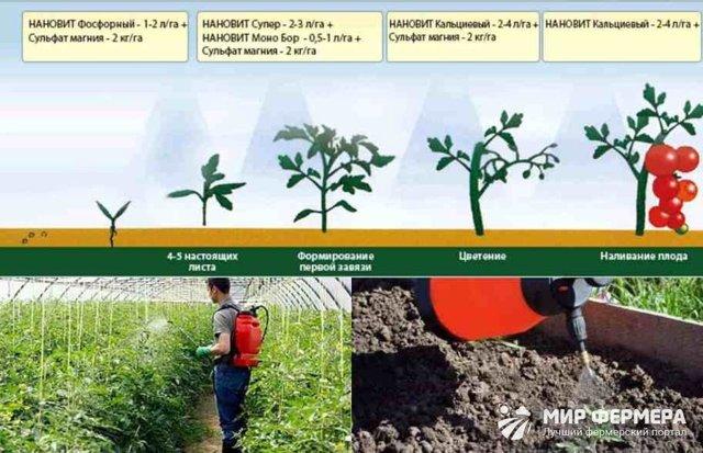 Дрожжи для огурцов теплице: удобрение почвы минеральными таблетками, парник и отзывы, йод и свежий навоз