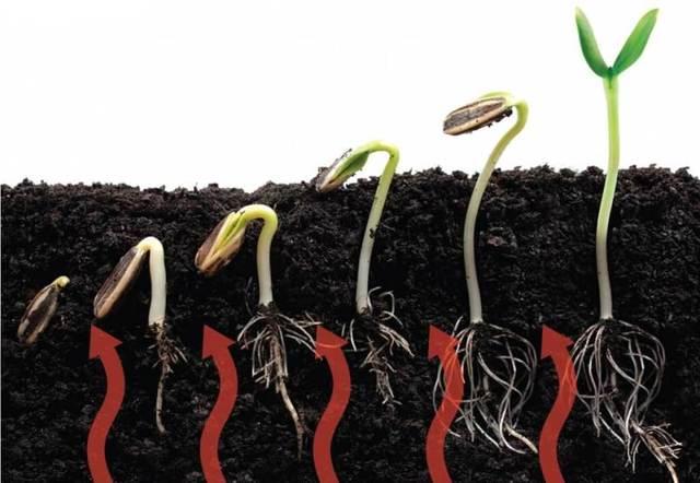 Теплые грядки в теплице своими руками: подогрев земли и грунта обогрев, поликарбонат сделать, весной парники