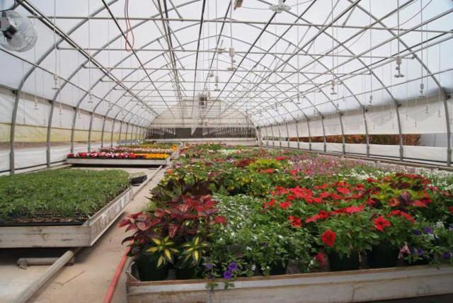 Парники и теплицы для дачи: дачный из поликарбоната, отзывы своими руками, фото лучшие садовые, нужен хороший дом
