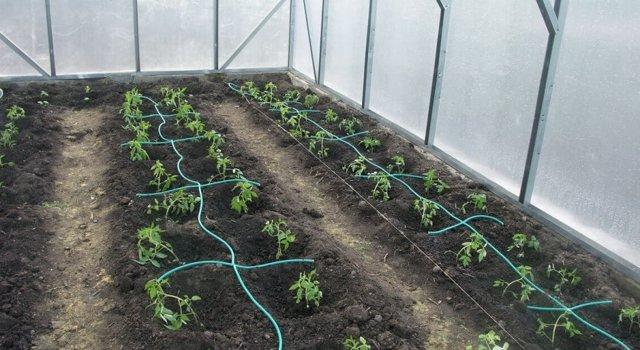 Круглогодичная теплица: выращивание овощей круглый год, своими руками парник, чеснок и цветы, малина выгодная