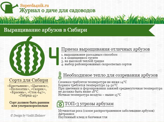 Как выращивать арбузы в теплице: выращивание в Сибири, вырастить в Подмосковье, уход за поликарбонатом