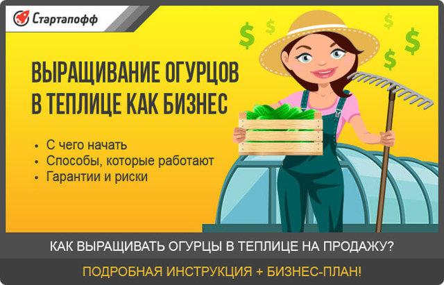 Выращивание огурцов в теплице как бизнес: на продажу как вырастить, рентабельность и план, дохода круглый год