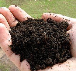 Обработка теплицы: поликарбонат и сбор урожая, посадка бруса фитоспорином, уборка до зимы, известь и марганцовка