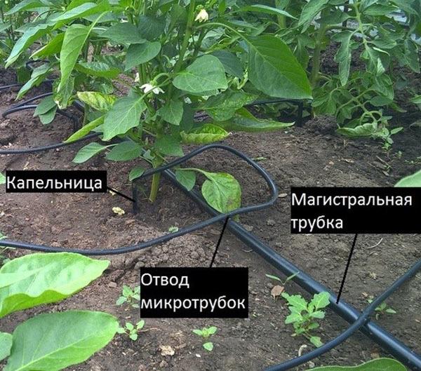 Капельный полив теплицы: из бочки своими руками, как самому сделать систему, видео и устройство жук, фото