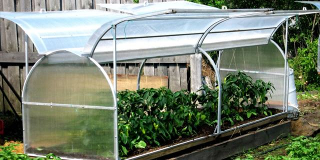 Теплицы из поликарбоната посадка и уход видео: рассады высадка, как сажать и высаживать, особенности выращивания