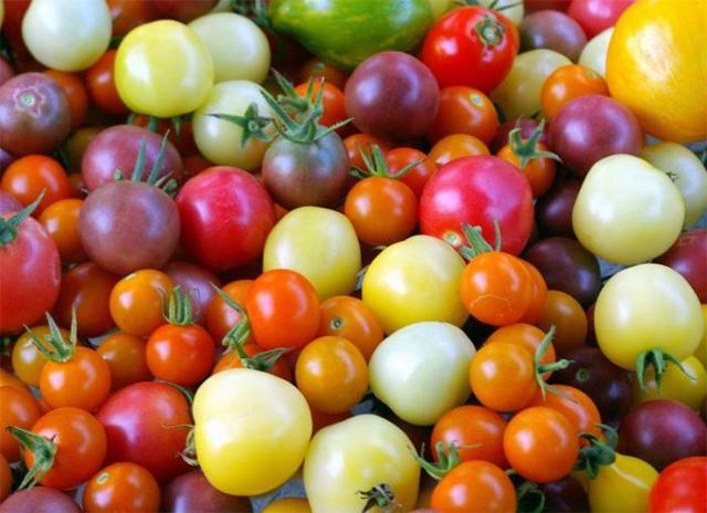 Лучшие сорта помидоров для Подмосковья в теплицах: урожайные томаты как сажать, популярное выращивание и отзывы