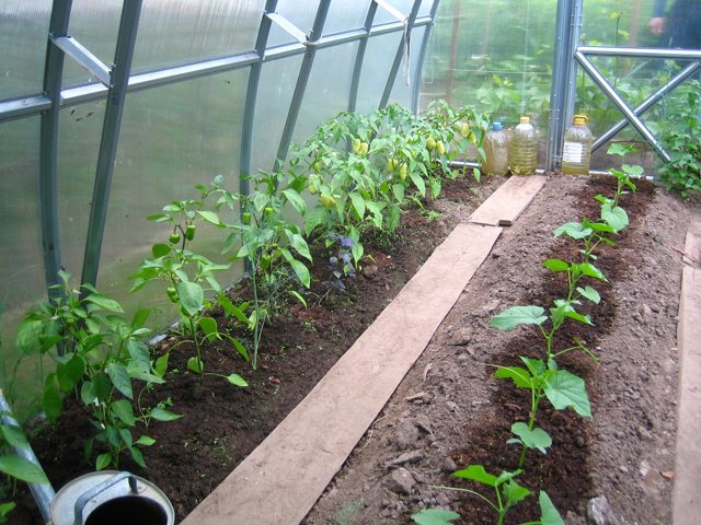 Выращивание овощей в теплице: для кабачков парники, рукколы и овощей сорта, своими руками из поликарбоната