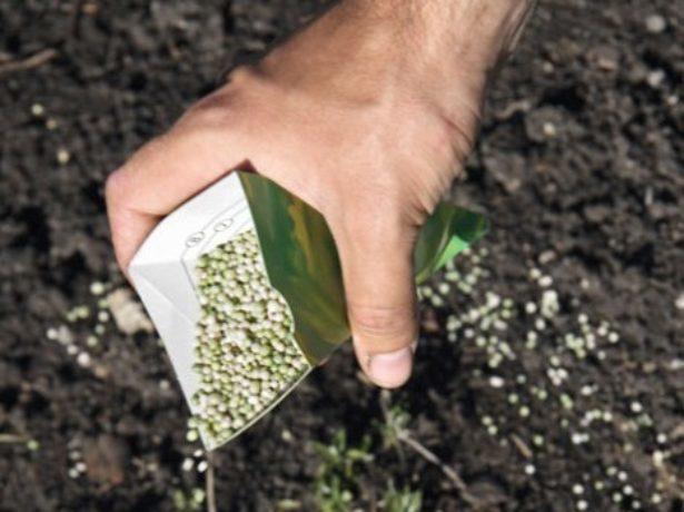 Вишня Владимирская, описание сорта, характеристика и отзывы, особенности выращивания