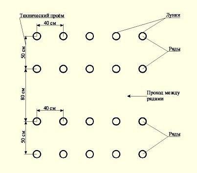 На каком расстоянии сажать огурцы в теплице: схема посадки, между чем садить, ширину грядки в парнике сделать