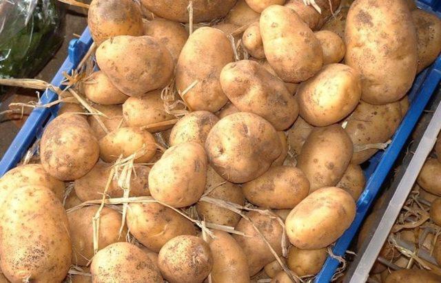 Как правильно хранить картошку в погребе зимой способы и правила хранения