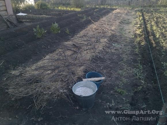 Выращивание картофеля под соломой, в том числе посадка, а также отзывы о полученных результатах