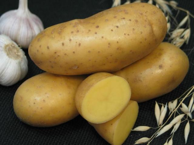 Сорт картофеля Императрица, описание, характеристика и отзывы, а также особенности выращивания