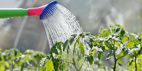 Сколько раз поливать теплицу: время полива утром и вечером, режим какой и методы, неделя первая для рассады