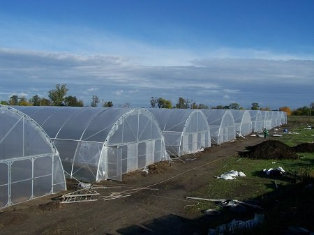 Фермерские теплицы: круглогодичные из поликарбоната, 8 метров на 20, изготавливаем большой зимний каркас