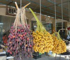 Как вырастить пальму финика из косточки в домашних условиях, инструкция по выращиванию   фото