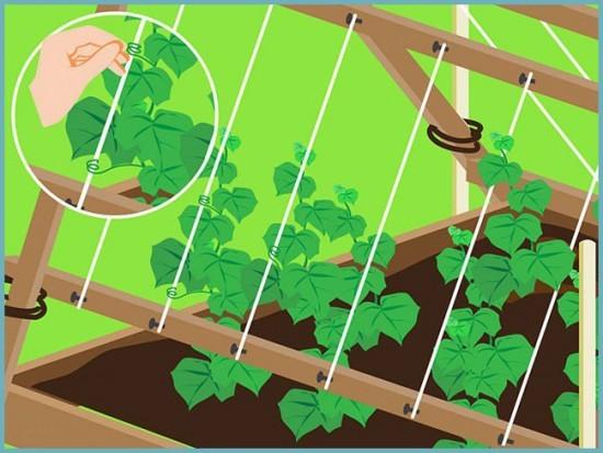 Как подвязывать огурцы в теплице: правильный парник, видео и фото, способы и система для растений, набор