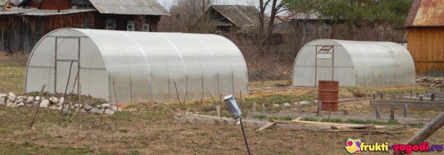 Что выращивают в теплицах: какие посадить культуры для выращивания, что лучше растет, как сеять и сажать малину