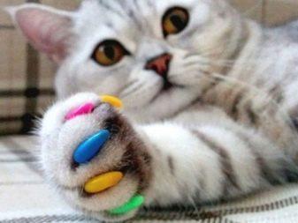 Как отучить кошку драть мебель и обои: что делать, как защитить, не рвать, чем отделать стены, чтобы кот не драл