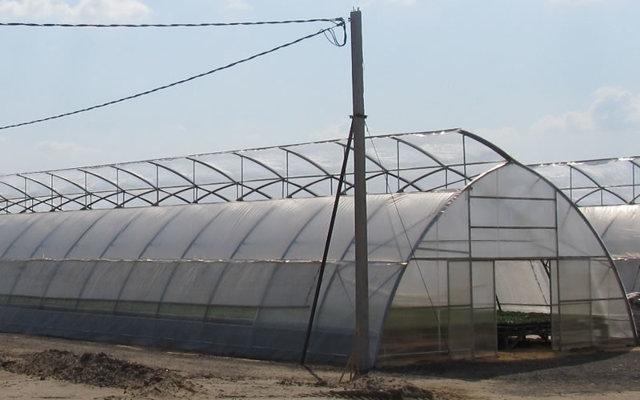 Тепличные хозяйства: теплицы России 2020, на юге хозяйственная постройка, организация и инвестиции