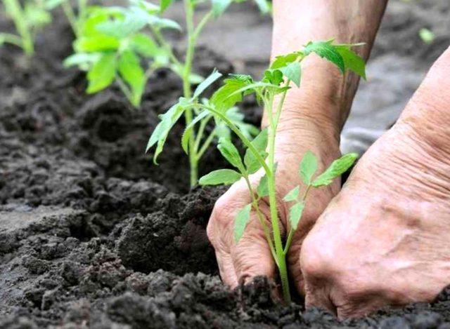 Установка теплиц: правильный монтаж и как установить сваи, поставить и закрепить на земле своими руками, как лучше