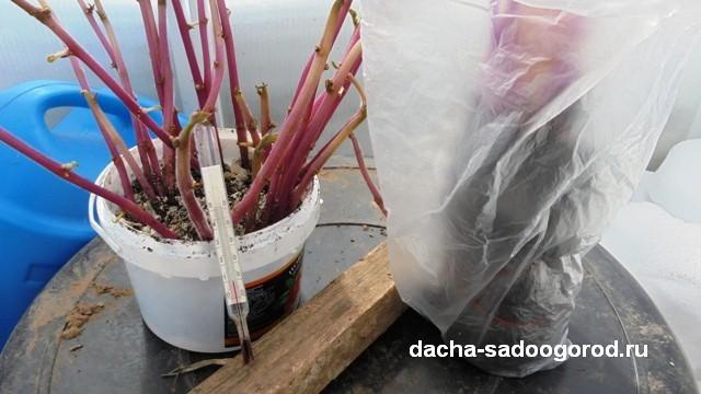 Когда высаживать рассаду в теплицу из поликарбоната: как сажать и время посадки, в апреле посадить и в августе