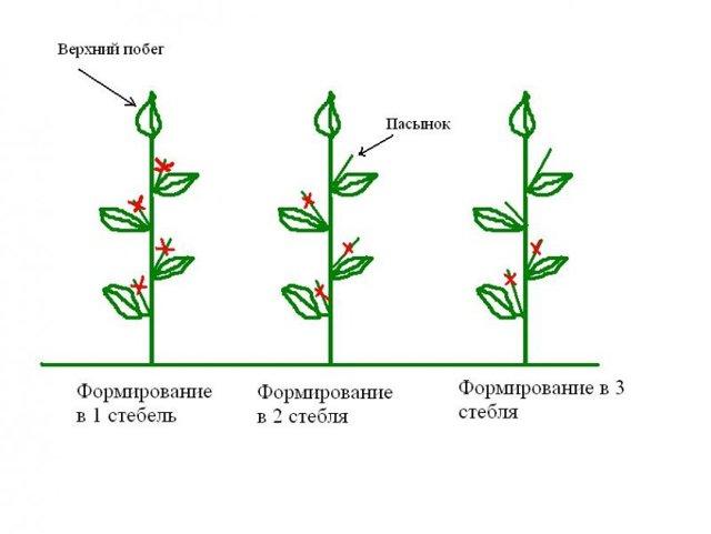 Как пасынковать перцы в теплице видео: формирование кустов, правильный уход за поликарбонатом, формировка