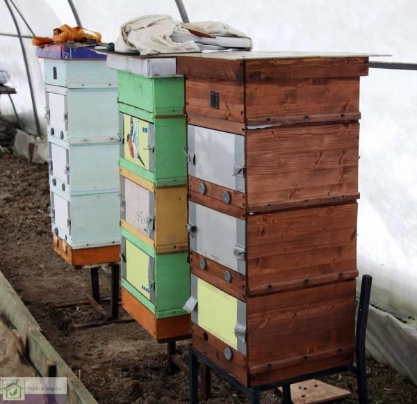 Зимовка пчел в теплице из поликарбоната: курятник и кролики зимой, облет и видео, содержание птицы, отзывы и гуси