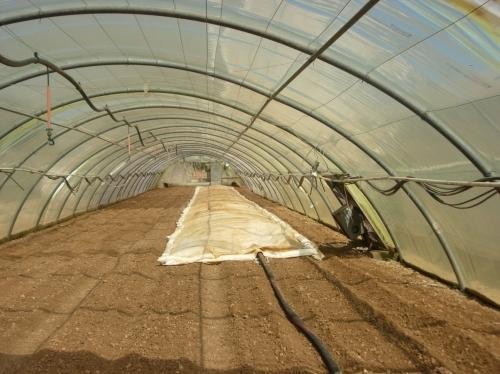 Как обеззаразить землю в теплице: из поликарбоната весной, дезинфекция осенью, обеззараживание почвы и земли