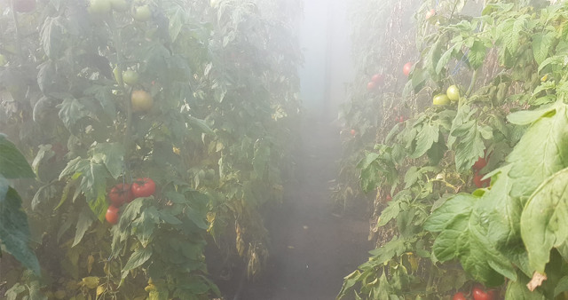 Удобрения для томатов в теплице: какие помидоры, йод и навоз, как удобрять сидераты, лучшие комплексные минералы
