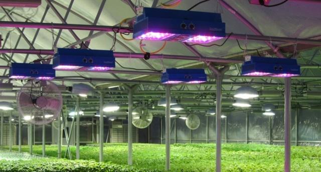 Светильники для теплиц: светодиодный свет, тепличная лента, прожектор и подсветка растений при выращивании