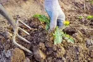 Борьба с паутинным клещом в теплице: меры по избавлению, обработка весной, средства профилактики, уничтожить