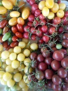 Лучшие сорта томатов Черри для теплиц: помидор выращивание и семена