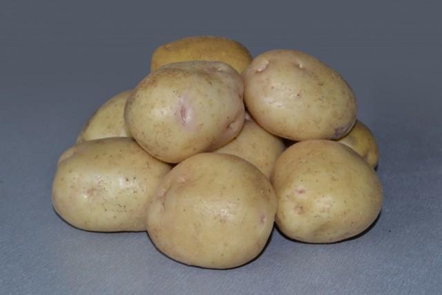 Сорт картофеля Невский, описание, характеристика и отзывы, а также особенности выращивания