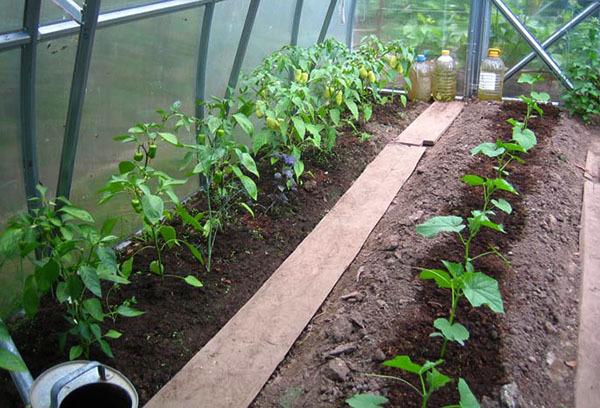 Полив в теплице: своими руками грядки, как подкормить рассаду, поливать растения лучше водой, как сделать парник