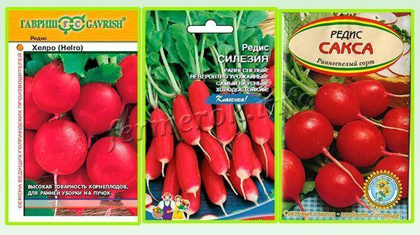 сорта редиса для теплиц: лучшие семена, выращивание и отзывы, какие сажать весной