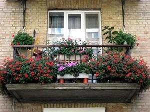 Цветы на балконе: фото лоджии и цветник комнатный, своими руками видео, клумбы и выращивание маргариток